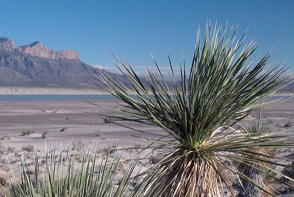 Stagecoaching in Guadalupe Mountains